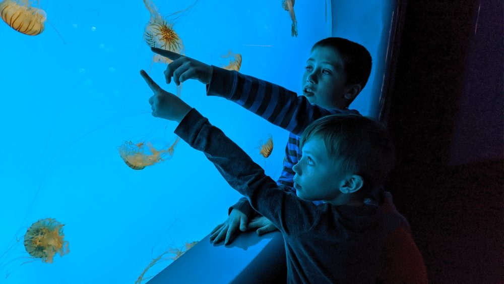 two young boys touching glass at an aquarium. jellyfish in their site.